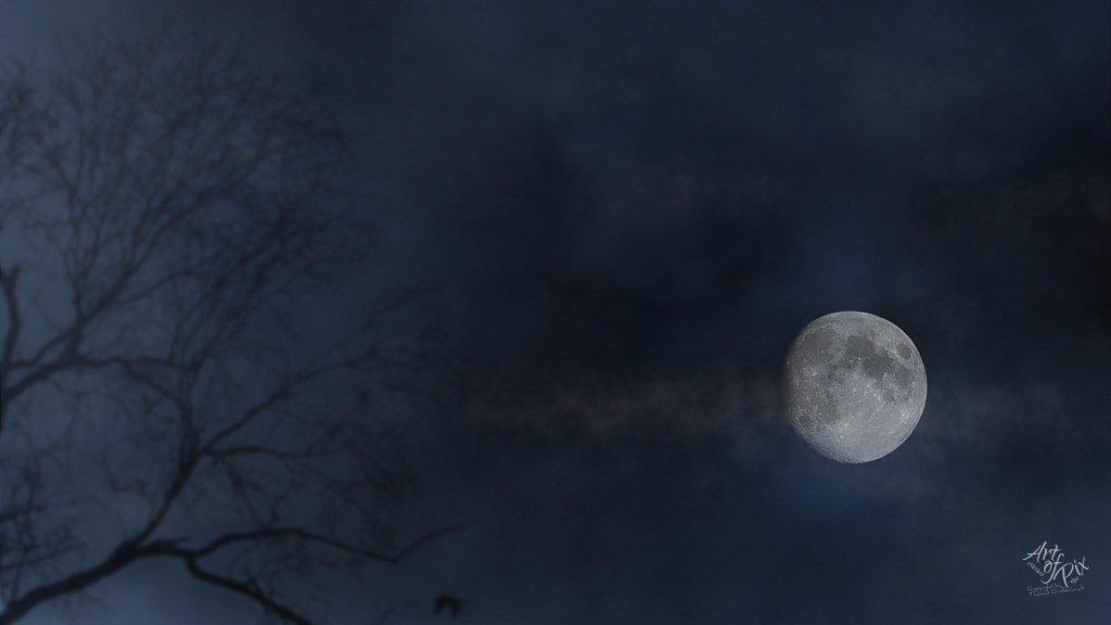 """""""Moonlight Shadows"""""""