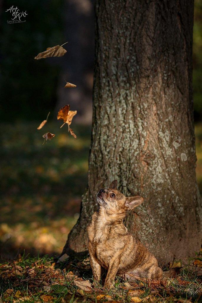 """""""Magic Autumn"""""""